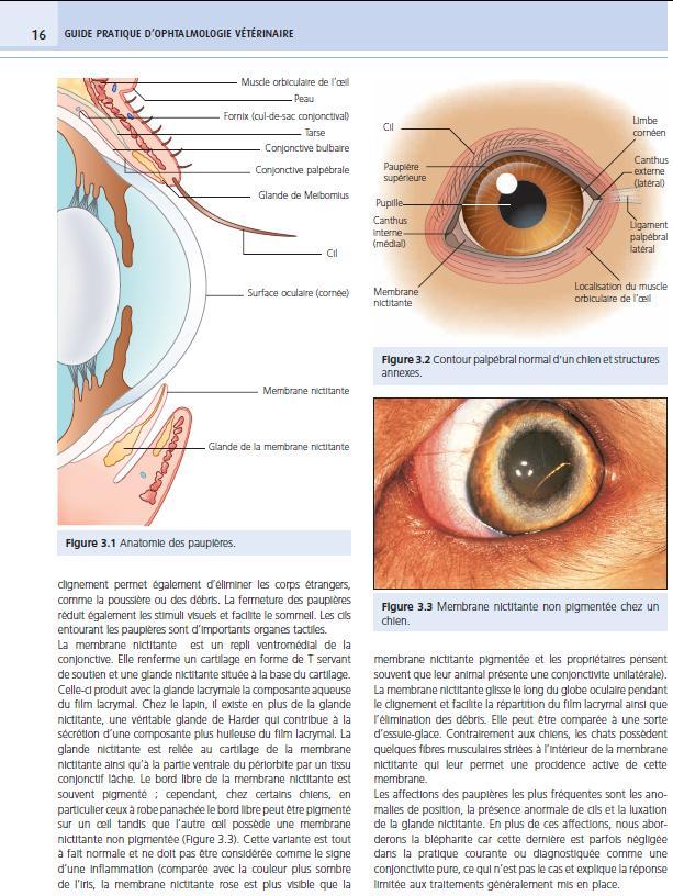 guide-pratique-ophtalmologie-veterinaire-p16, medcom, laurent bouhanna, sally M. TURNER, vetbooks, livre, ouvrage, La-Dépêche